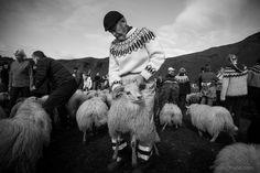 RETTIR Rettir is the collection of the sheep beginning of september.