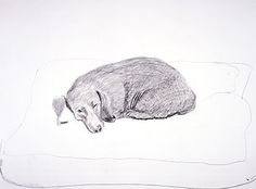David Hockney's drawing of dog.