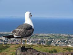 Widok na miasto z wygasłego wulkanu Arthur's Seat #WielkaBrytania #Edynburg #UnitedKingdom #UK #Scotland #Szkocja #Edinburgh Angelika Maj pracownik Call Center