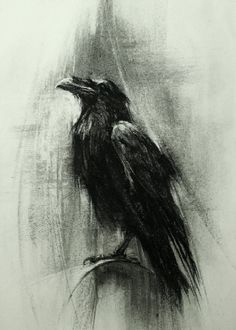 Use of charcoal effectively captures the appearance of a crow/raven. Apart from the dark colour, the indefinite strokes captures accurately the contour of the bird's feathers. Crow Art, Raven Art, Bird Art, Tattoo Oma, Tattoo Bird, Crow Painting, Bird Paintings, Bild Tattoos, Crow Tattoos