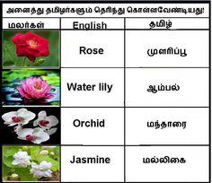 .tamil
