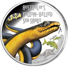 Deadly and Dangerous – Yellow-Bellied Sea Snake 2013 1 oz Silver Proof Coin Funnel Web Spider, Snake Images, Sea Snake, Saltwater Crocodile, Valuable Coins, Gold Money, Gold And Silver Coins, Silver Bullion, Australian Animals