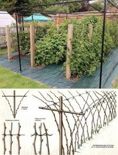 How To Maintain A Fall Vegetable Garden Veg Garden, Garden Trellis, Fruit Garden, Vegetable Gardening, Outdoor Plants, Outdoor Gardens, Landscape Design, Garden Design, Espalier