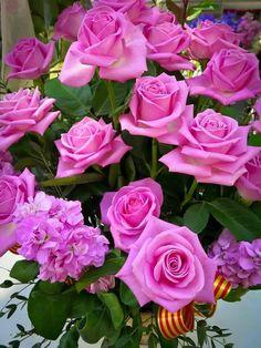 Roses. Mis flores