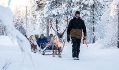 Reindeer Sleigh Ride - Enjoy the reindeer sleigh ride through the snowy forest. Reindeer And Sleigh, Snowy Forest, Sit Back, Finland, Northern Lights, Adventure, Outdoor, Outdoors, Nordic Lights