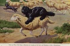 Hungarian Puli And Sheep Lovely Dog Greetings Note Card Hungarian Puli, Puli Dog, Puppy Day, Herding Dogs, Vintage Dog, Dog Show, Selling Art, Beautiful Dogs, Vintage Colors