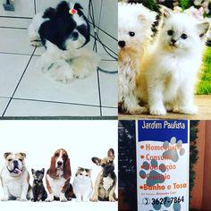CLÍNICA VETERINÁRIA JARDIM PAULISTA, localizada na cidade de Ribeirão Preto, SP na rua Arnaldo Victaliano, 211 #veterinaria #pets #petshop #clinicas #medicina #medvep2015 #ribs #ribeiraopreto #saopaulo #saosimao #franca #barretos #batatais #rifaina #loveit #cravinhos #serraazul #sertaozinho #brodowski #pirassununga #araras #araraquara #dogs #doglovers #dogsofinstagram #limeira #saocarlos #rioclaro #leme
