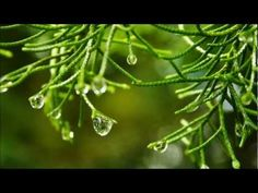 Rain, Wind, and Ocean — The 3 Great Sounds of Nature Yoga Music, Meditation Music, Mindfulness Meditation, Guided Meditation, Sound Of Rain, Spring Shower, Alternative Therapies, Music Heals, Music Therapy