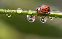 Celebramos el Día Internacional del Medio Ambiente con una selección de imágenes donde la naturaleza es la protagonista