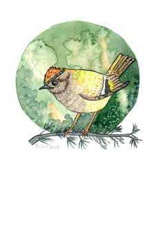Goldcrest watercolor by Anastasy Siilin