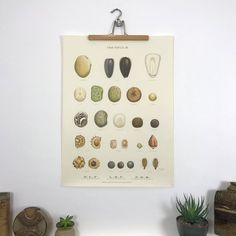 Danish Vintage Botanical Wall Chart - No 3 // Frø Tavle III' - A beautiful botanical wall chart dating back to the 1940s. Illustrated by Ellen Backe (1891-1975). Printed in Denmark on paper between 1943-8. Part of a series of six botanical charts depicting several seeds in stunning detail and colour.