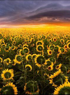 Empire of The Sun by Adrian Borda - Photo 128766647 - 500px (Romania)