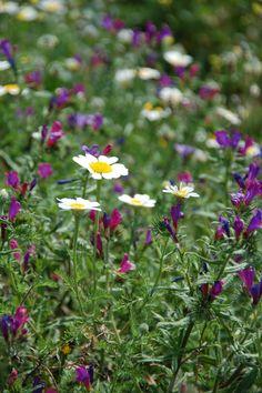Orgiva wild flowers