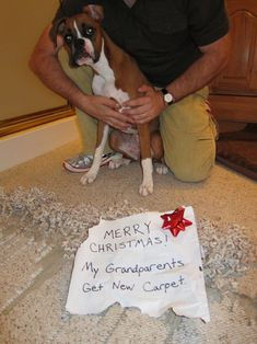 Merry Christmas! My grandparents get new carpet! #humor #lol #funnypuppies Most funny puppies http://buymelaughs.com/