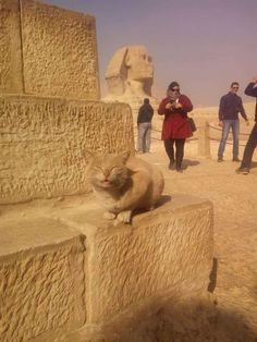 """Look at me. I'm the Sphinx meow."""