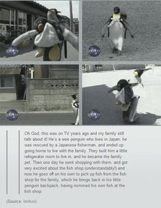 This penguin is smarter than some people I know.