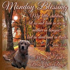 Good Morning Everyone, Happy Monday, I pray that you have a safe and blessed day! Monday Wishes, Monday Greetings, Monday Blessings, Morning Blessings, Morning Prayers, Good Morning Everyone, Good Morning Good Night, Morning Wish, Good Morning Quotes