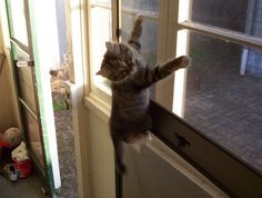 Window Screens | 21 Words That Mean Something Different When You Have A Cat @starlight8o2