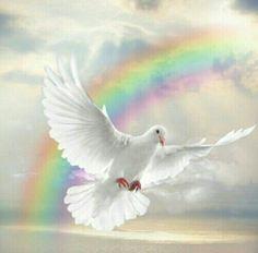 White dove and rainbow
