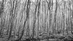 a forest by Davide Mantovanelli on Landscape Pictures, Landscapes, Paisajes, Scenery Paintings, Scenery, Landscape Photos