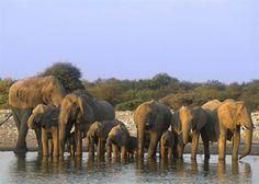 Etosha National Park, Northern Namibia