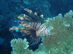 Google Image Result for http://beautifulscenerys.com/wp-content/uploads/2011/06/Great-Barrier-Reef-Screnery.jpg