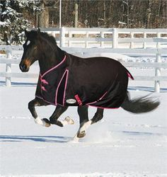 Supra Turnout - The Supra Turnout features a waterproof 600 denier outer shell with a breathable 210 denier nylon lining that helps polish th Horse Barns, Horse Tack, Equestrian Shop, Western Tack, Horse Accessories, Plaid Design, Saddles, Horseback Riding, Beautiful Horses