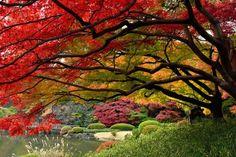 Fall colors.   #autumn