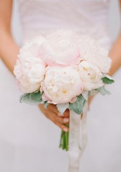 Classic pink peonies and large leaf dusty millers <3