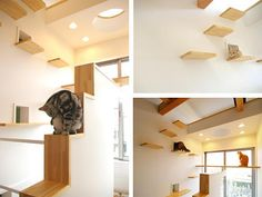 Fun Ideas For Kitties To Run Around The House!