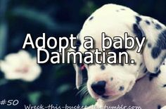 Love Dalmatians!!