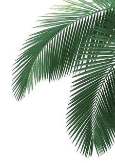 Tropical Leaves, Tropical Plants, Plant Wallpaper, Nature Wallpaper, Leaves Wallpaper Iphone, Trendy Wallpaper, Fabric Wallpaper, Iphone Wallpapers, Leaf Template