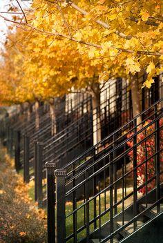 la-chute-des-feuilles:  South Grove Avenue by DAJanzen on Flickr.