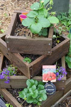 Stacked Strawberry planter boxes. Cute looking but not so sure it would produce many strawberries though this gal said it did.