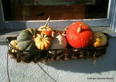 Pretty fall garden container with winter squashes. Seasonal Wisdom's Fall Garden Guide with tips, recipes and folklore.