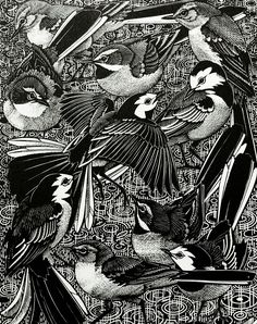 Colin See-Paynton : Walk of Wagtails at Davidson Galleries Illustrations, Illustration Art, Davidson Galleries, Tinta China, Scratchboard, Wood Engraving, Linocut Prints, Bird Prints, Woodblock Print