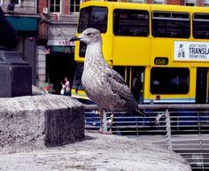 In the city - © 2011 - Niccolò Matterazzo