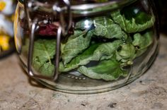 http://jschillingphoto.de/ brombeere, haselnuss, nut, leaf, blatt, herbst, tee, tea
