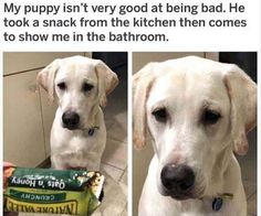Funny Animal Picture Dump Of The Day 25 Pics http://ibeebz.com