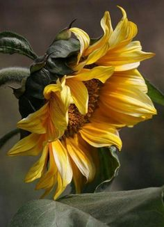Sunflower Shepherd, you could show this to a tattoo artist and have them sketch something up Fauna and Flora … Paintings Tumblr, Flowers Nature, Flowers Garden, Mellow Yellow, Artist Painting, Watercolor Flowers, Flower Art, Beautiful Flowers, Beautiful Gorgeous