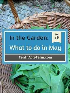 May+is+a+busy+month+for+gardeners!+Here+are+some+ideas+for+staying+calm+and+how+to+prioritize+planting,+weeding,+watering,+and+more.