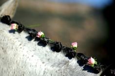 Wedding horse mane knot braid with pink tea roses Toni Kami ❀Flowers in their coats❀