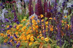 Chelsea Flower Show 2015 - migawki i różności ogrodowe - Ogrodowisko