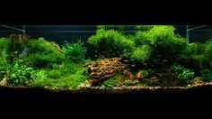 How can you  learn aquascaping? Go to Wetarms.com/Sign-Up the links in our bio!  Gary Wu Kwok Fai