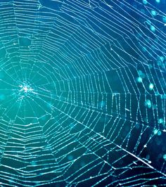*The intricate beauty of a spider web
