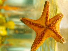 """""""Hanging Out""""  #starfish #underthesea"""