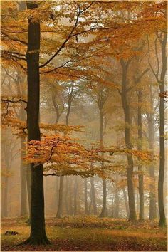 Autumn beech forest The post Autumn beech forest autumn scenery appeared first on Trendy. Beautiful World, Beautiful Places, Beautiful Pictures, Beautiful Forest, Stunningly Beautiful, Autumn Scenery, Tree Forest, Autumn Forest, Foggy Forest
