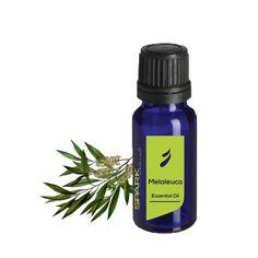 Melaleuca Essential Oil | Spark Naturals