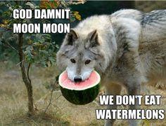 Oh Moon moon dbz freak: Photo