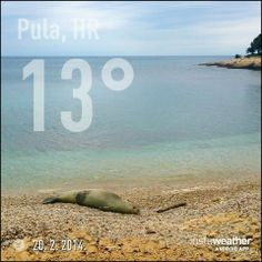 Mittelmeer-Mönchsrobbe in Pula  #Pula #Istrien #Kroatien #Tiere #Natur